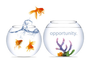 opportunity-fish